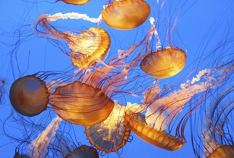 Quemadura por tentáculos de medusa