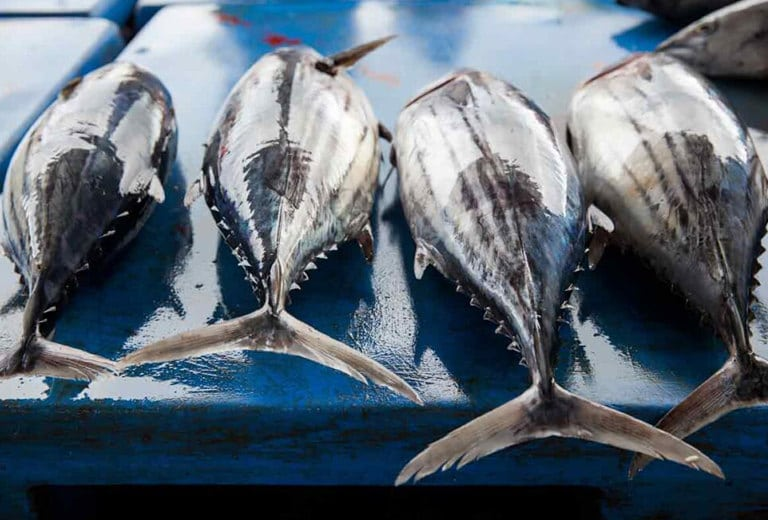 Comprehensive risk management for the tuna fishing sector